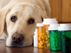 Собака и таблетки