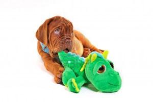 Собака с плюшевой игрушкой