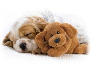 Многие собаки любят мягкие игрушки